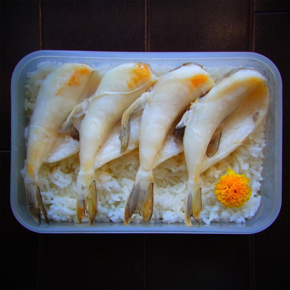 fugu fish and a flower bento art