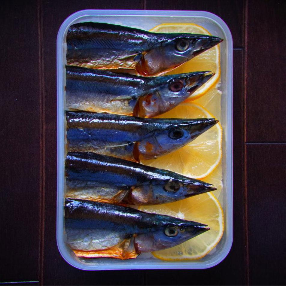 sardines sanma bento art