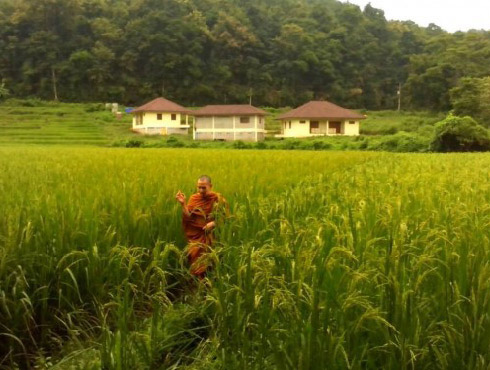 monk walking through a field