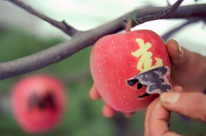 peeling kanji sticker off of an apple