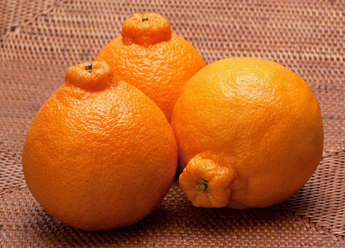 three dekopon hybrid oranges
