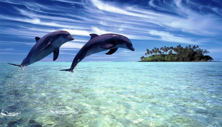 pair of jumping dolphins in foreground with island in background