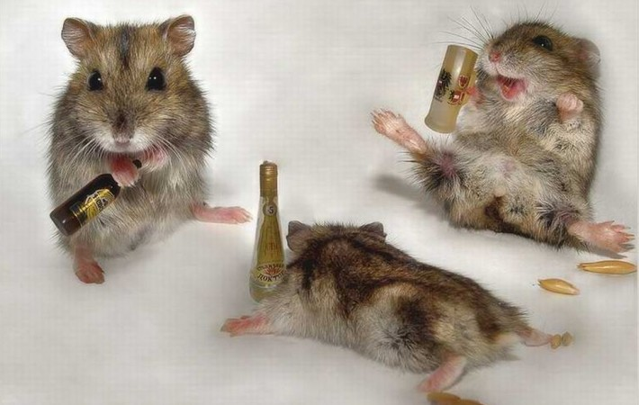 Mice posing with mini beer bottles