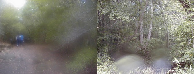 purported photos of nurikabe in aokigahara forest