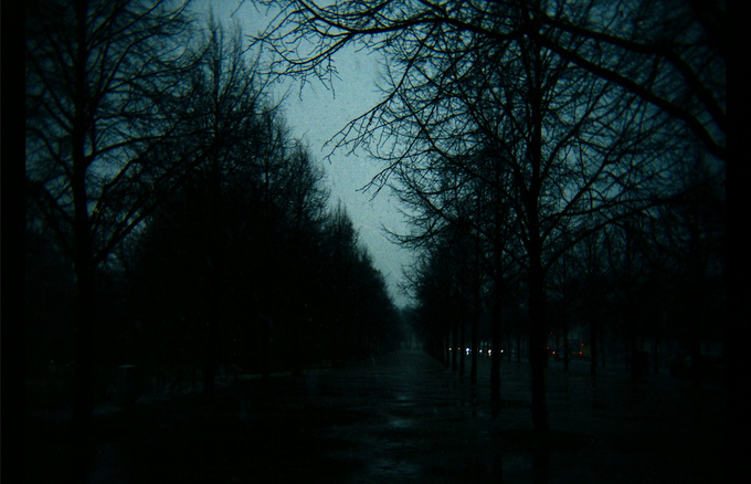 trees in a park at dusk