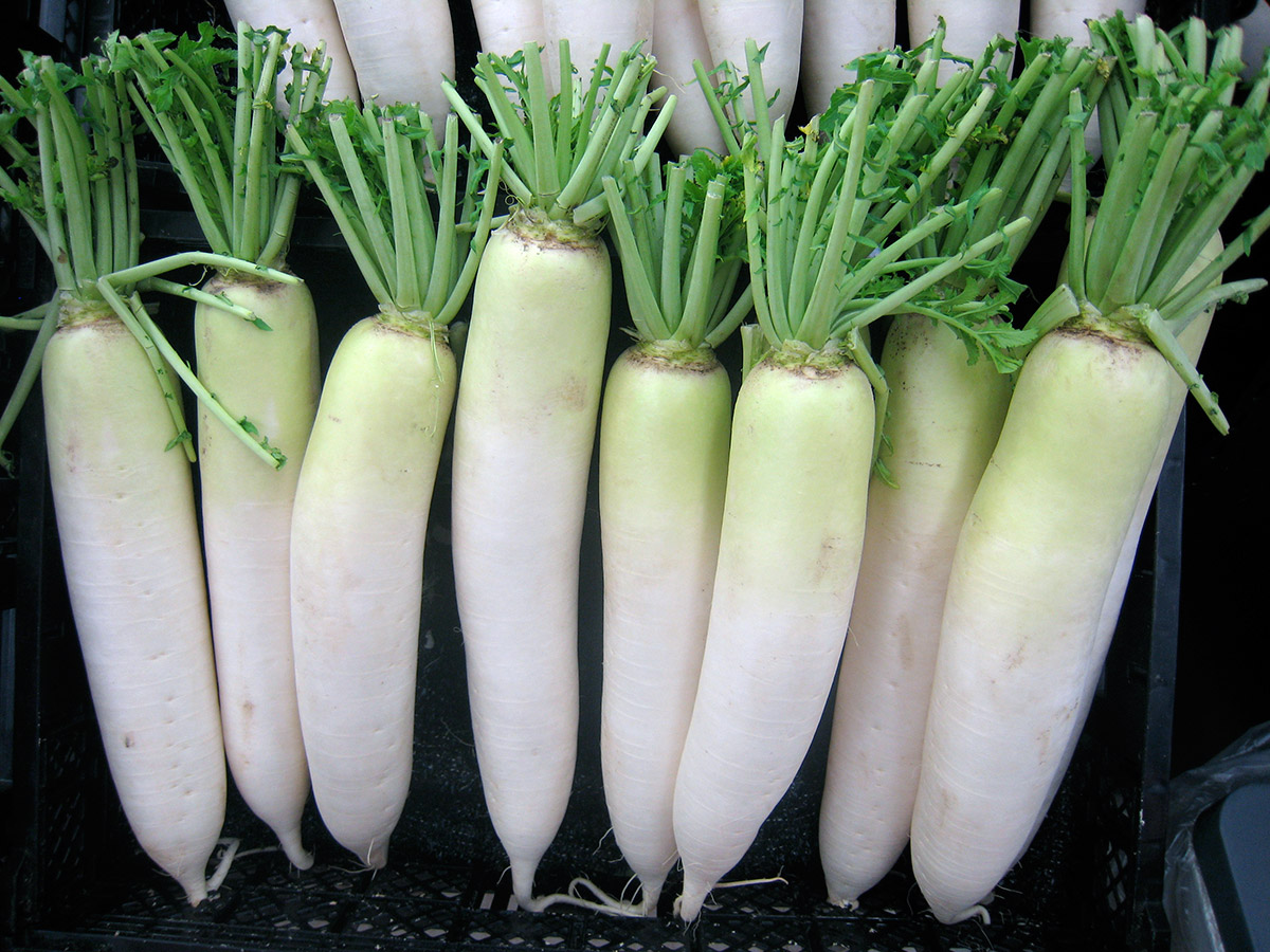 daikon in a row