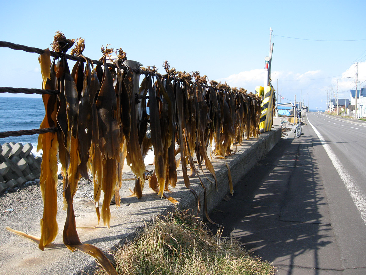 kombu hanging to dry by the sea