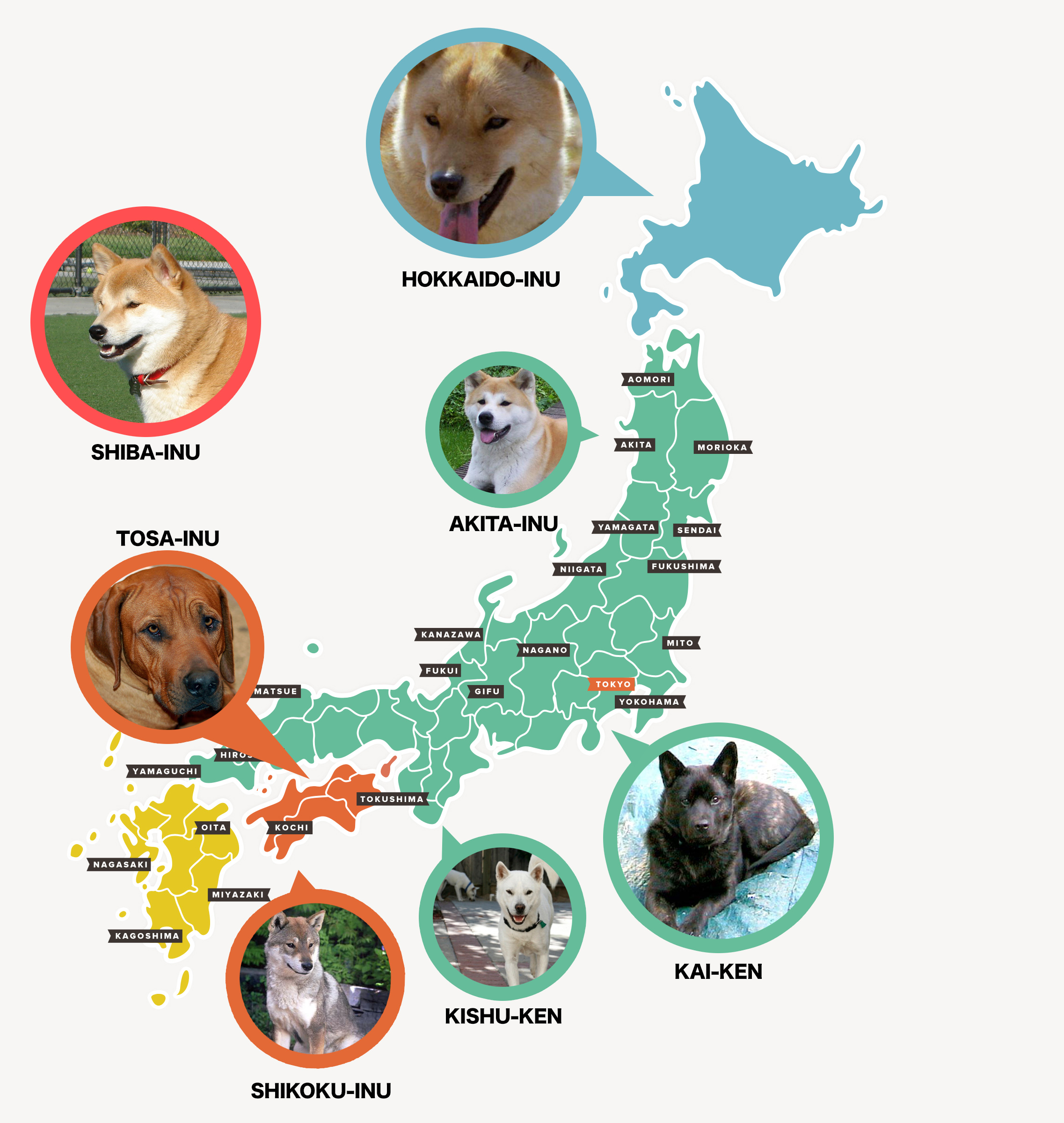 Map of where Japanese dog breeds are located