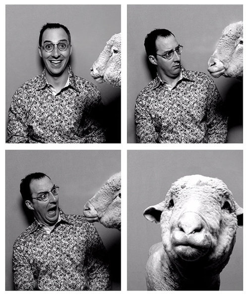 four pictures of man and sheep