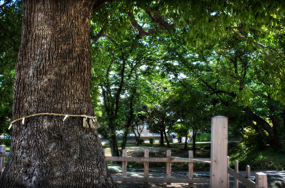 park in japan with tree wrapped in simenawa rope