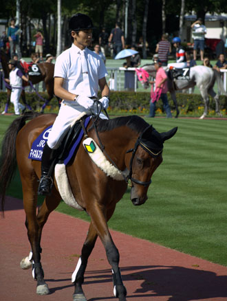 A man riding a horse with a wakaba mark