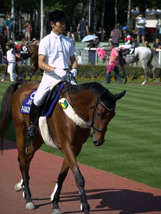 A man riding a horse with a wakaba mark