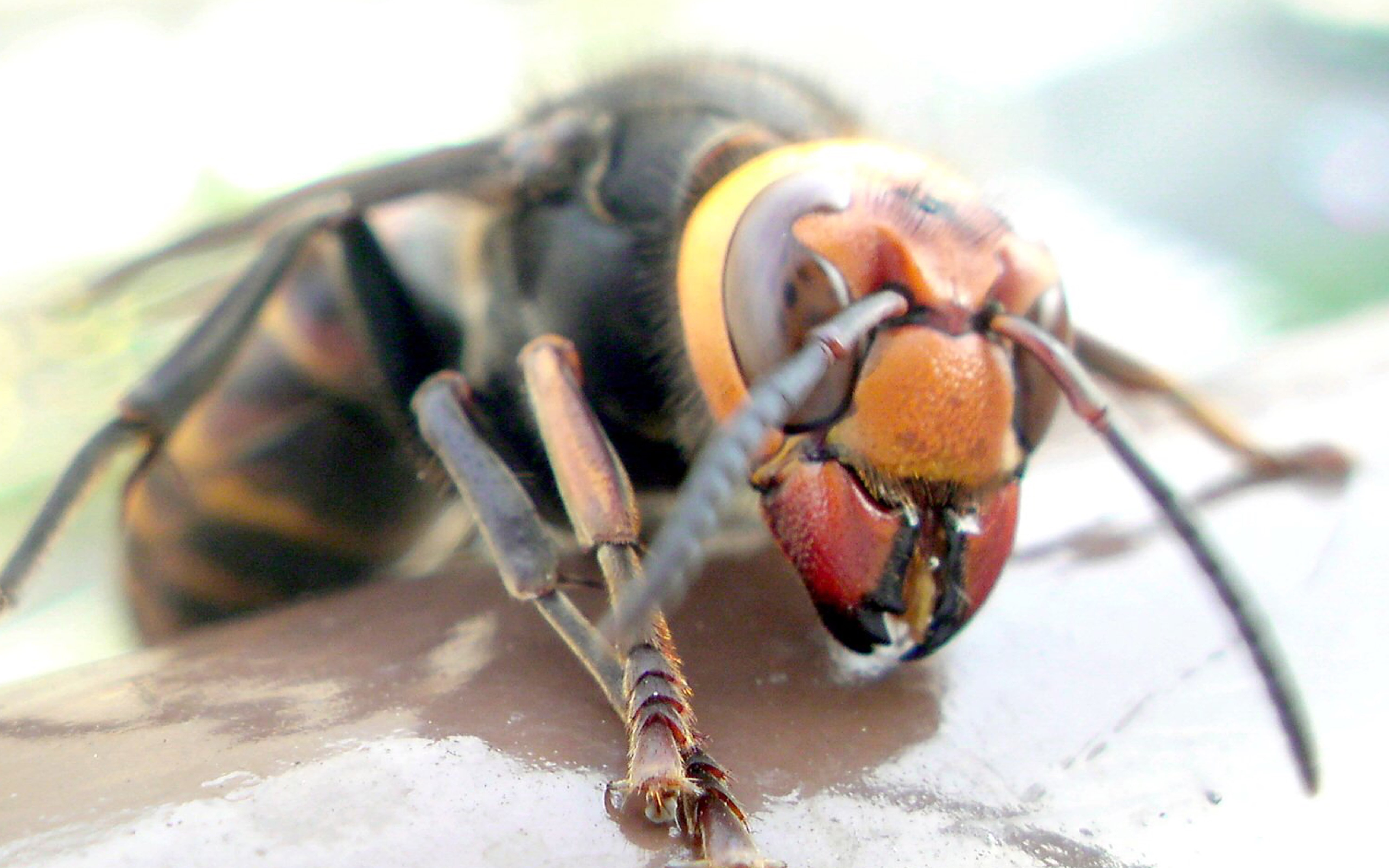 Japanese Insects So Horrifying You Will Never Visit Japan