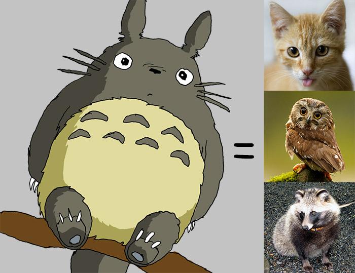 biology breakdown of totoro cat tanuki owl