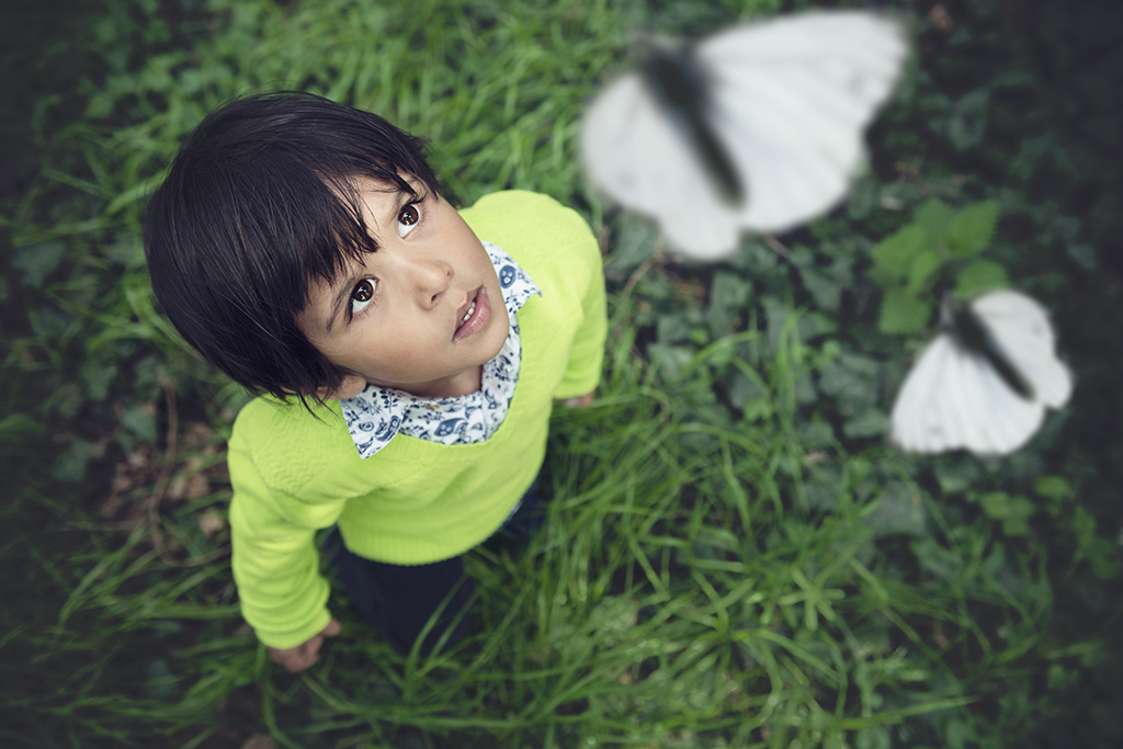 young boy looking at butterflies