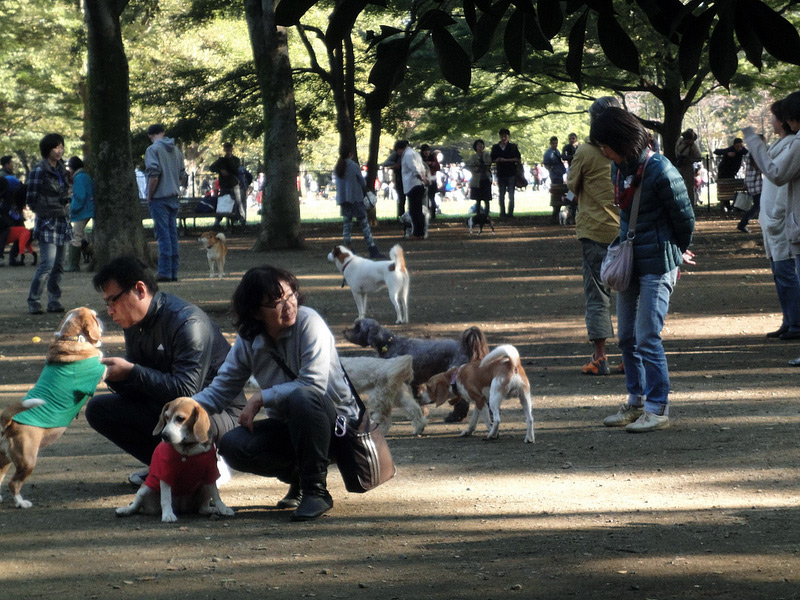 Japanese dogs and owners playing at dog park