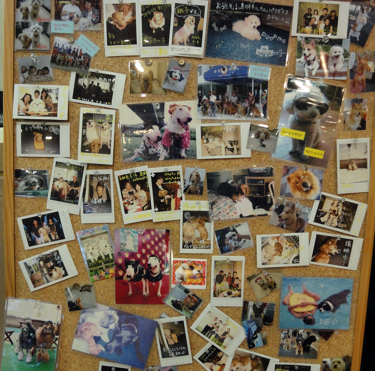 cork board with photographs of dogs pinned on