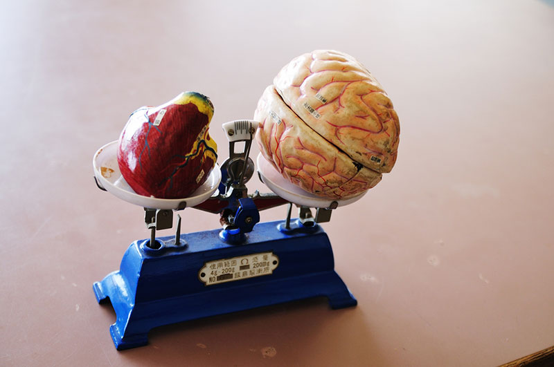 childrens toy with a heart and a brain balanced