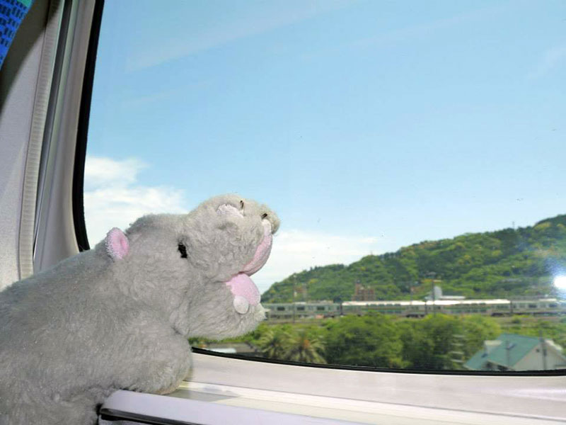 stuffed hippo on a train