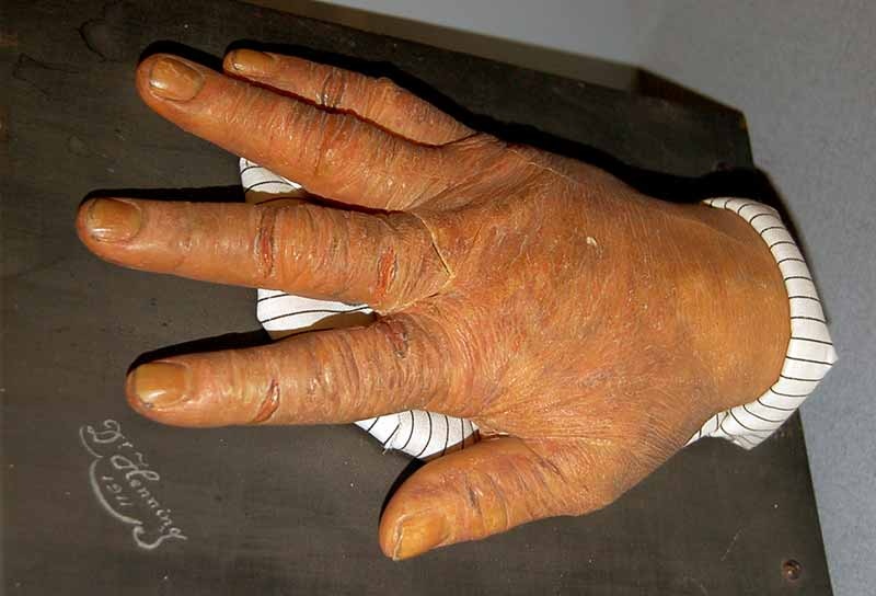 wax replica of right hand