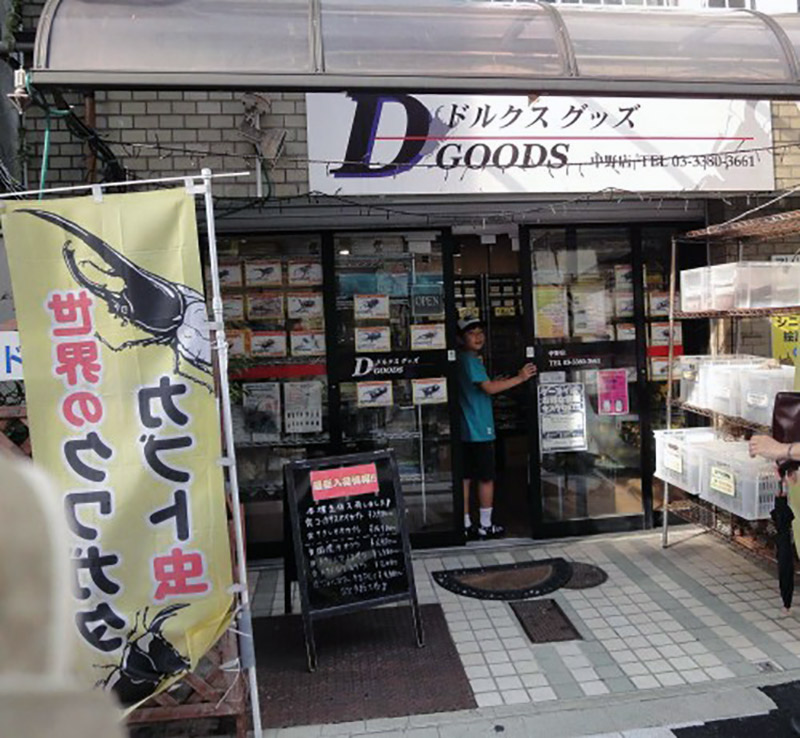 A small shop selling beetles in Japan