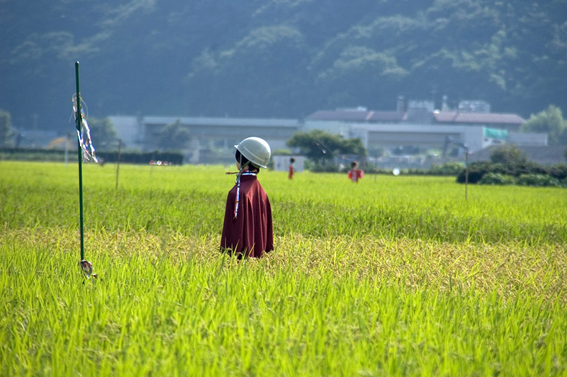 scarecrow with white helmet in field