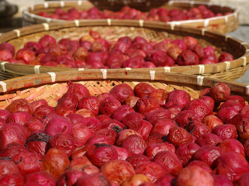 umeboshi pickled red plums drying in the sun