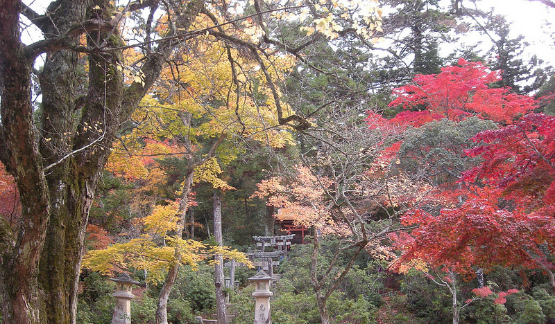 autumn leaves red orange and green trees japan