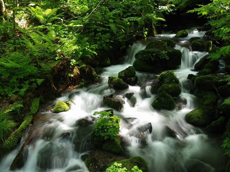 Long exposure photo of water flowing down a forest