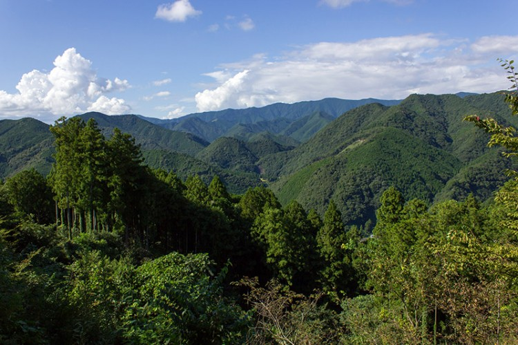 View at treetop level of hills in Japan