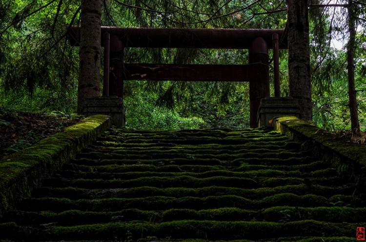 mossy torii