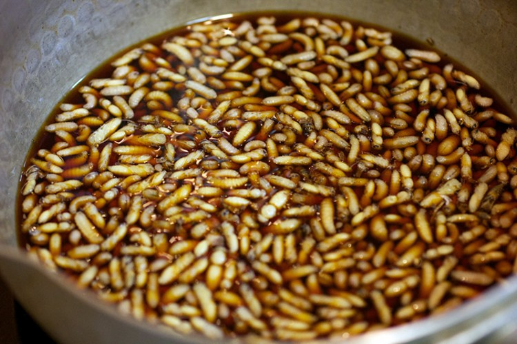 larvae for food protein in a brown broth