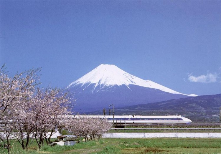 cherry blossoms with Mt. Fuji behind