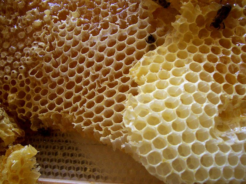 honeycomb china unsafe food