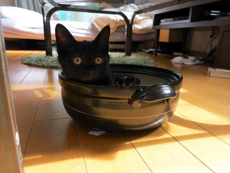 black kitten in cooking bowl