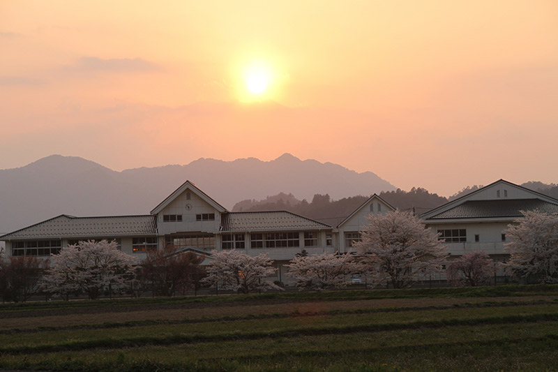 Susnet and cherry blossoms at a Japanese school