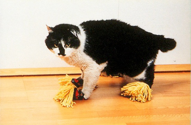 cat wearing suit with mop attached