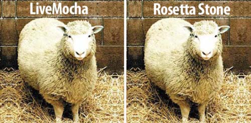 identical pictures of sheep
