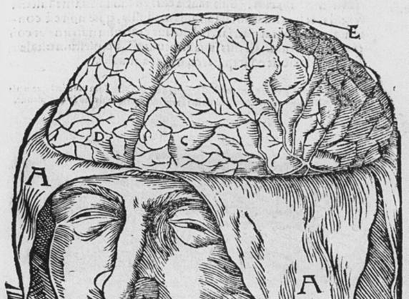 medieval illustration of the brain with letters
