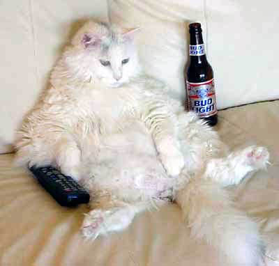 fat cat reclining on couch with remote and beer bottle