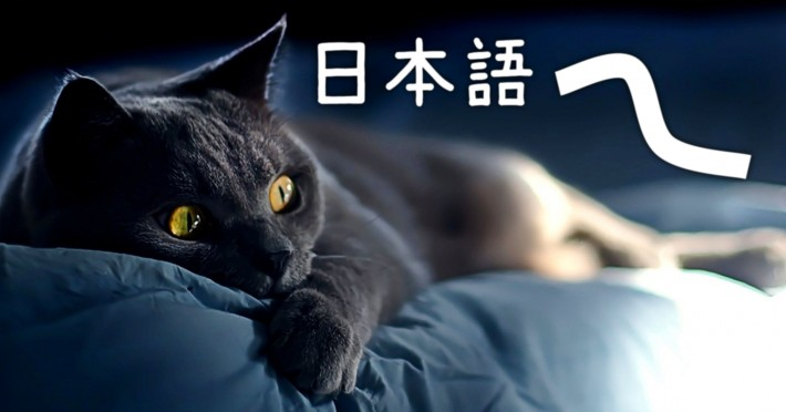 Cat on a couch passively learning Japanese