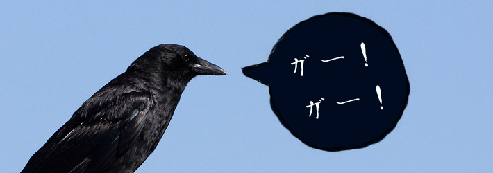 crow raven with japanese speech bubble nevermore