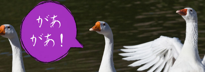 goose with japanese speech bubble