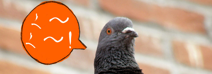 pigeon with japanese speech bubble