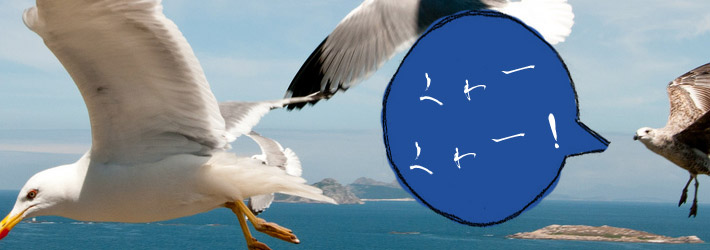 seagulls with japanese speech bubble