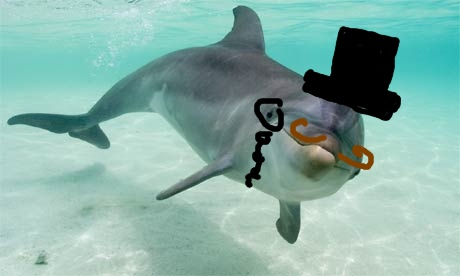 Dolphin with a hat and mustache drawn on it