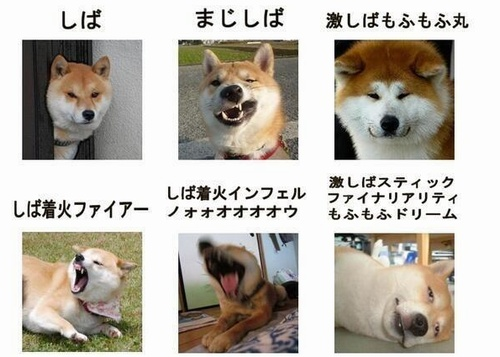 The anger scale for a shiba inu