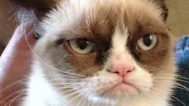 cat with unhappy expression