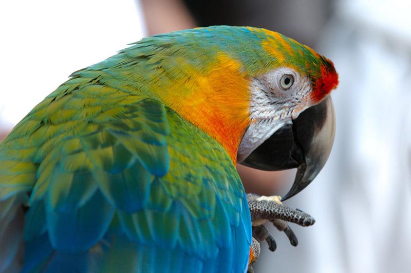 kobun honorifics parrot