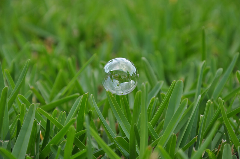 bubble resting on blades of grass